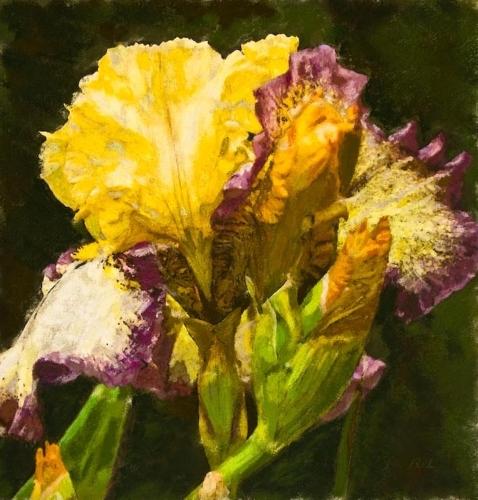 Iris Still Life