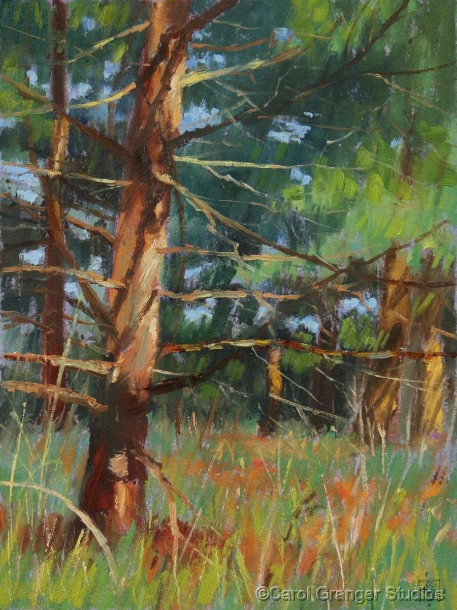 White Pine Memories, Study (large view)