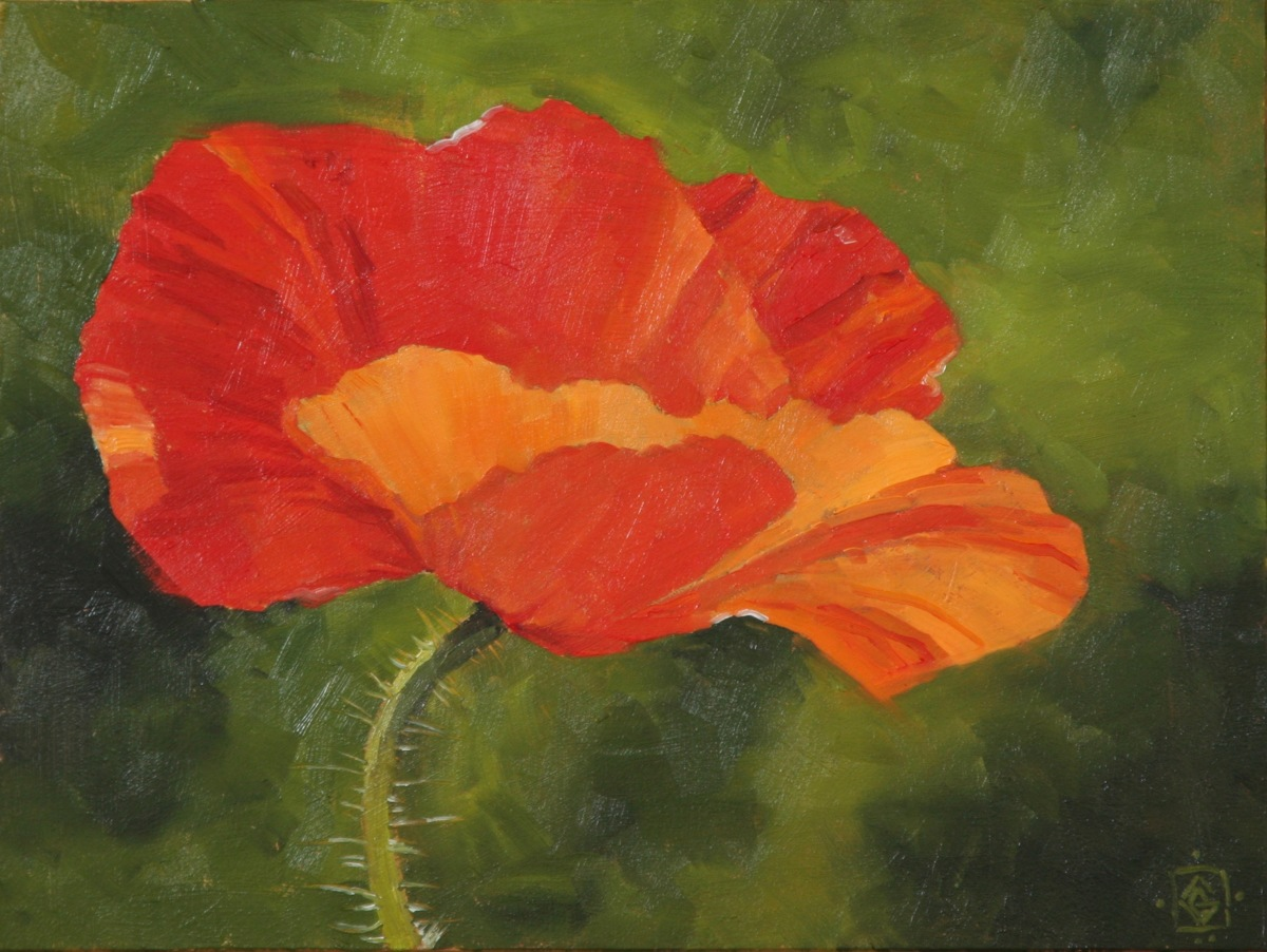 Delicate Poppy (large view)