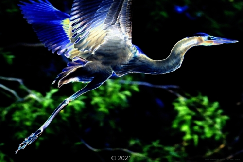 'Light Heron' by Frank Bibbins