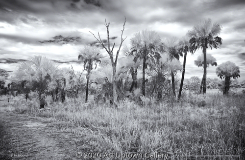 'Myakka Trail' by Frank Bibbins