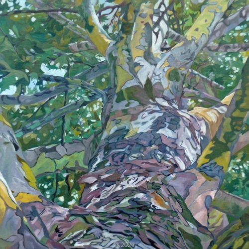 'Summer Sycamore' by Evelyn McCorristin Peters