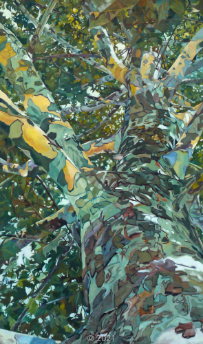 'Sycamore Fall' by Evelyn McCorristin Peters