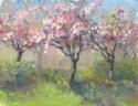 Spring Trees (thumbnail)