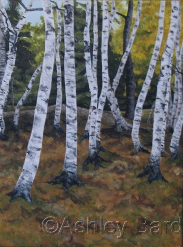 White Birch Trees by Ashley Bard