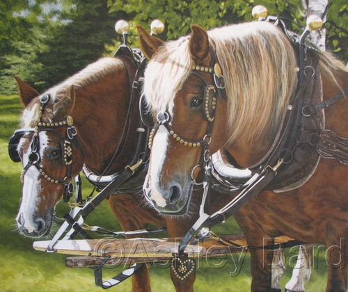 Horses by Ashley Bard