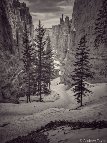 A snowy canyon trail by Andrew Tayler