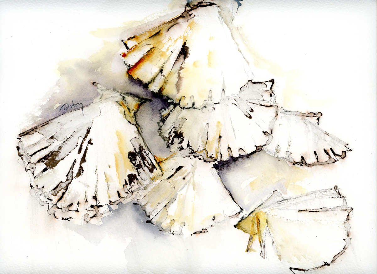 Scallops (large view)