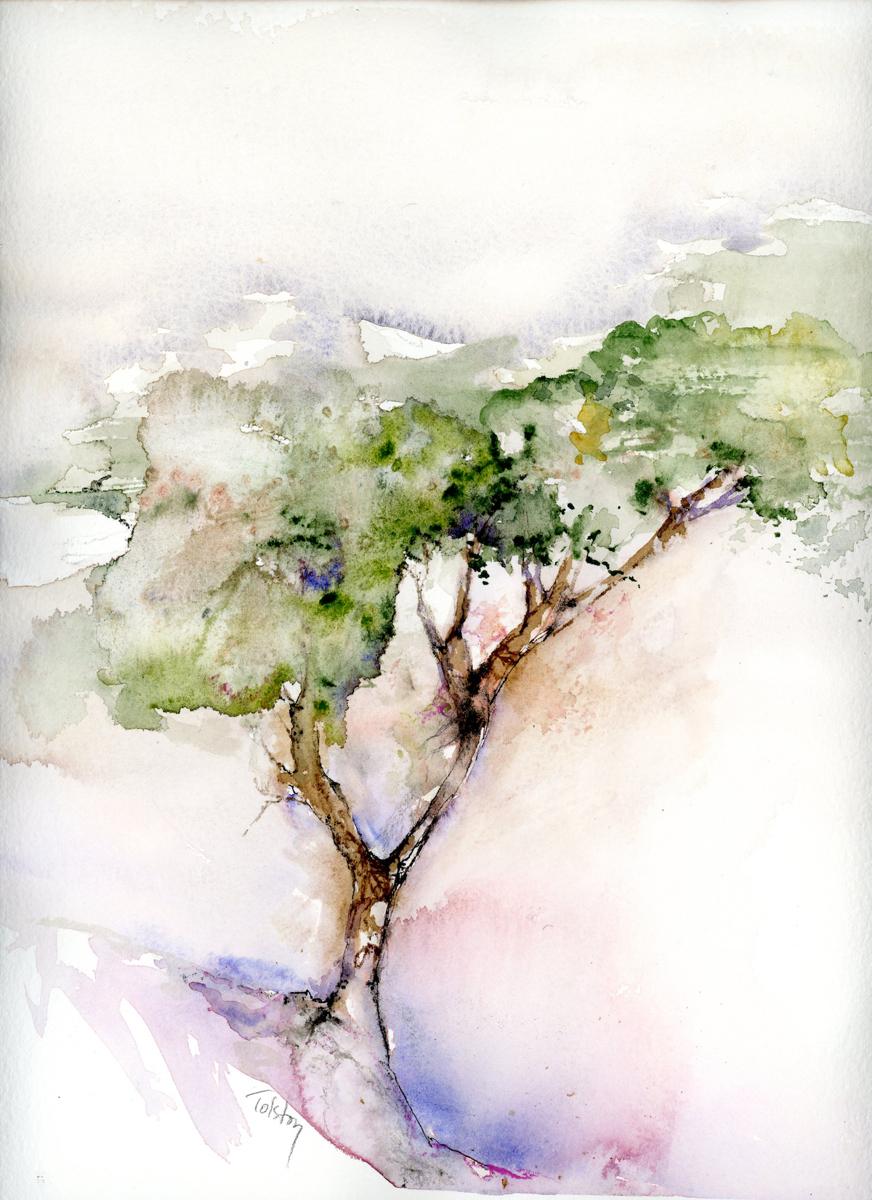 Acacia Tree (large view)