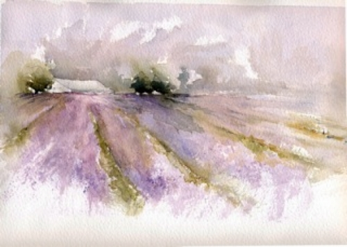 Lavender Fields (large view)