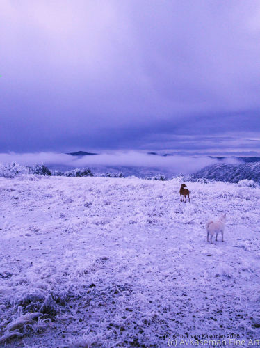 Scottish Moor in Winter with Canines
