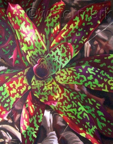 spotted bromeliad