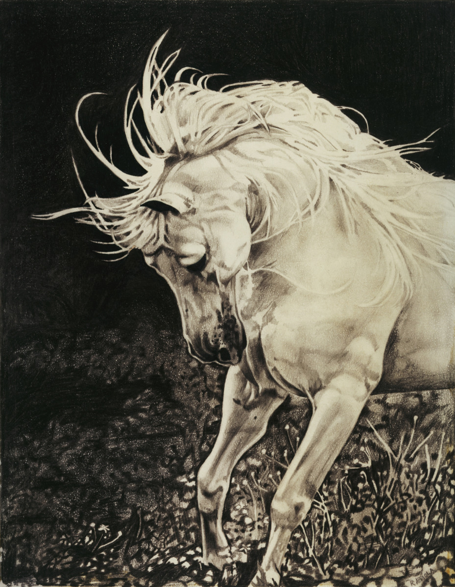 Pencil drawing of a wild horse (large view)