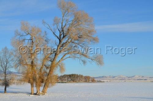 Morning Light - Ennis, MT by Barbara Swan Roger