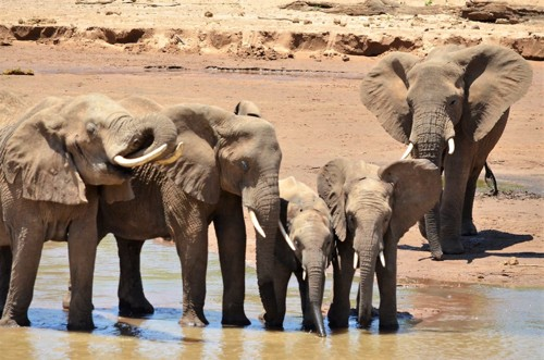 Elephants by the River by Barbara Swan Roger