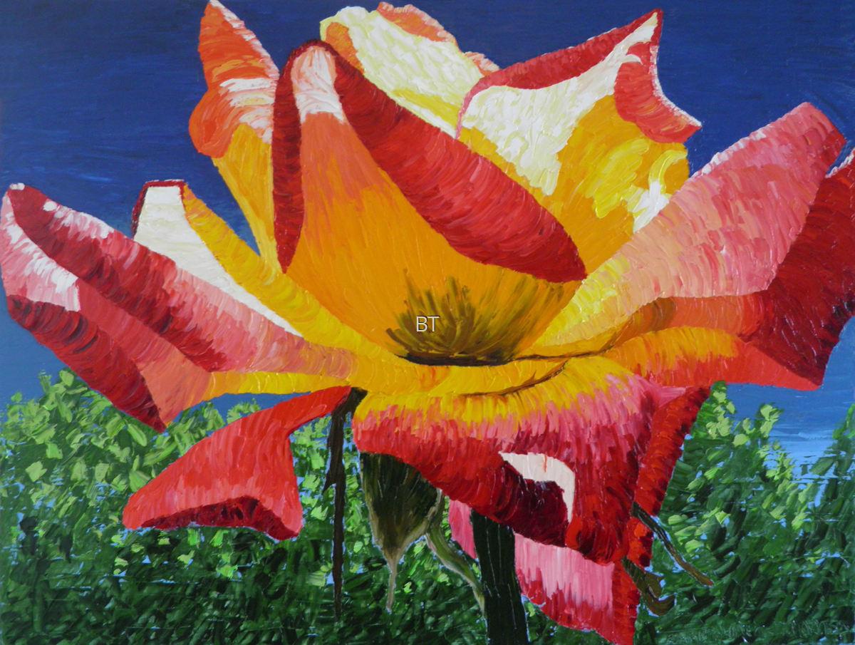 Sunlit Rose (large view)