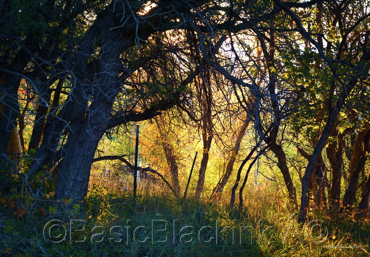 Mountain Thicket  (large view)