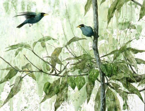 Green Honeycreepers (large view)