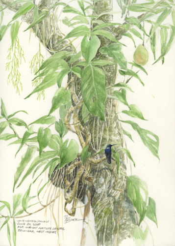 Jacobin and the Mango Tree (large view)