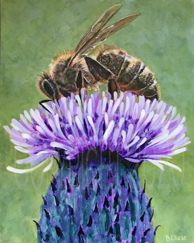 Bee on Thistle by Barbara Chase