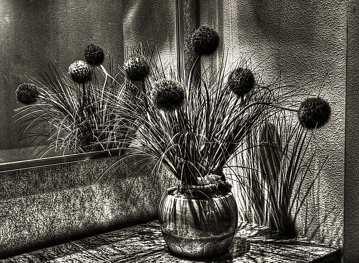 Still Life at the Reiner's in B&W (large view)