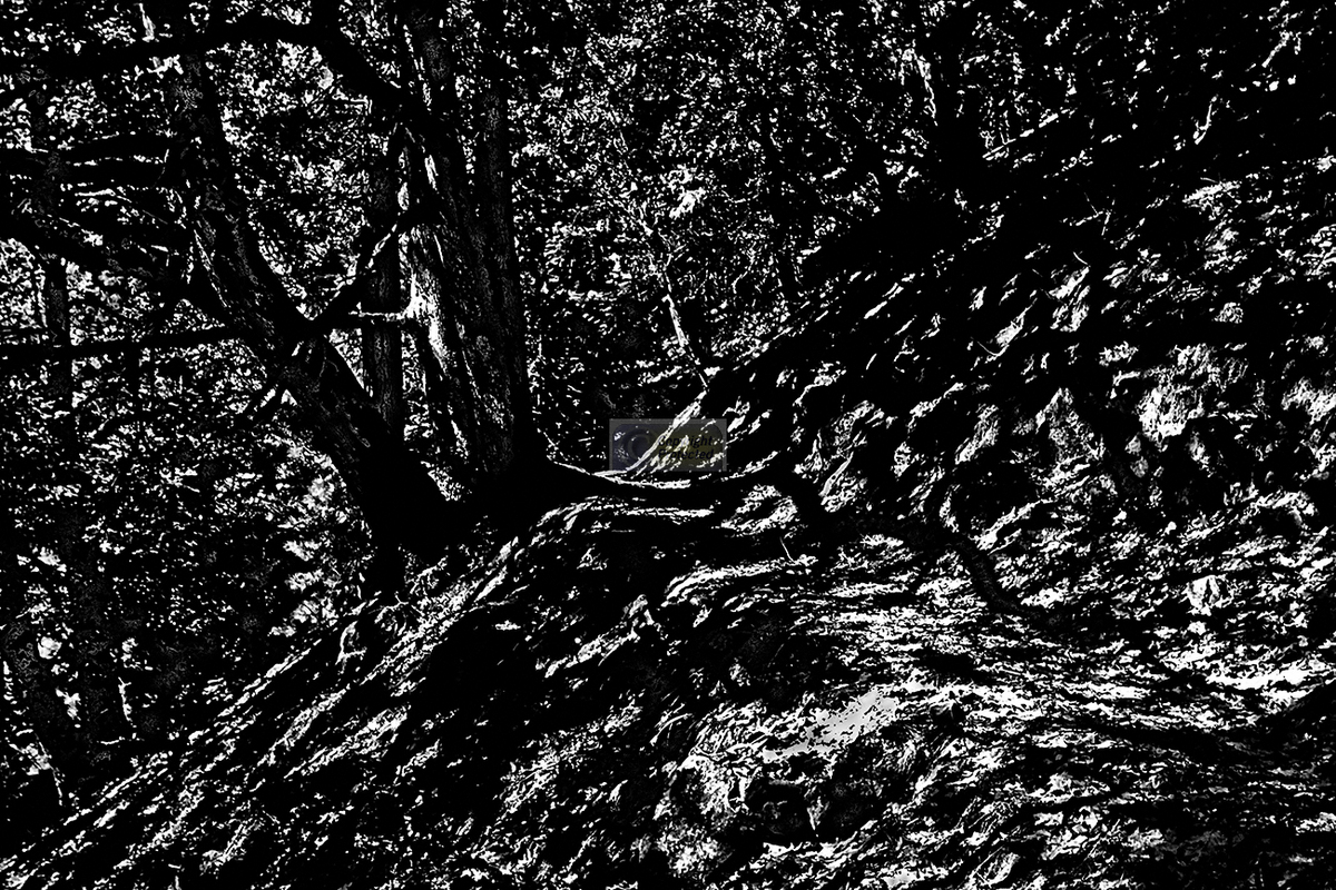Branches of Shadows n Light (large view)