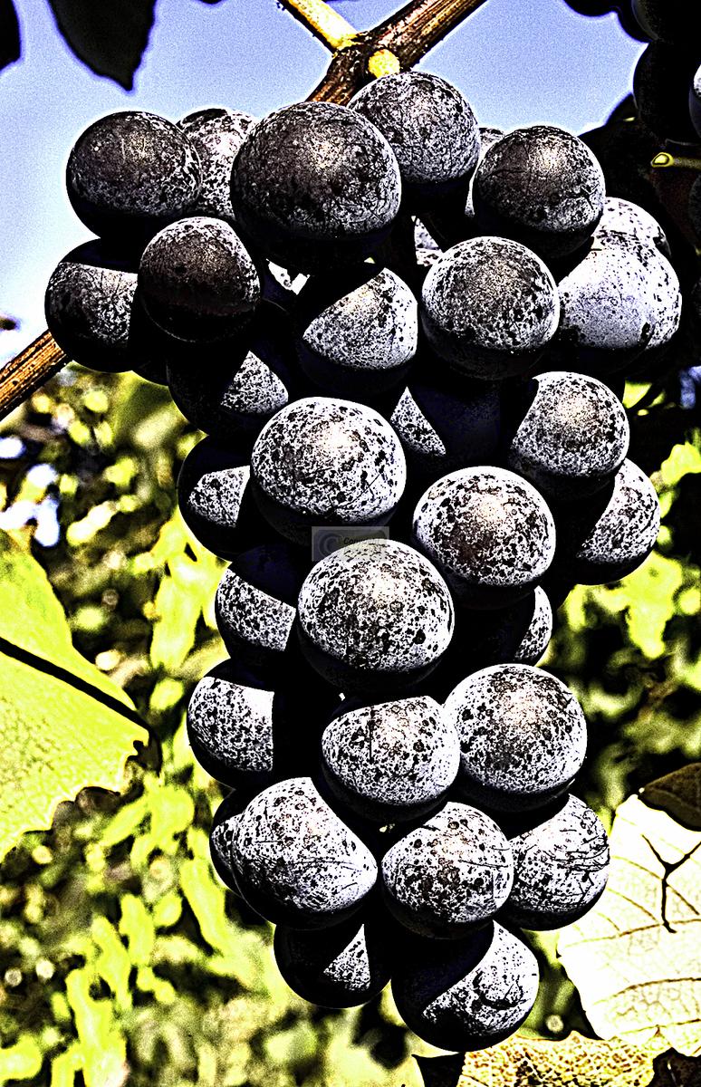 Vine ripened (large view)