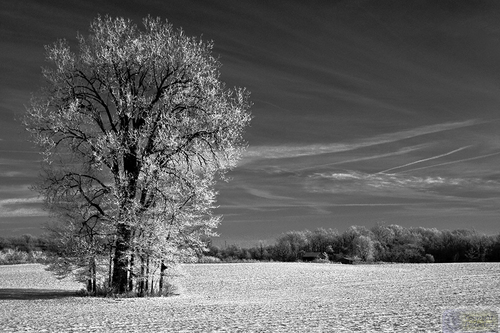 8189 B&W untitled (large view)