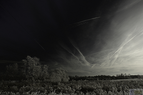 Field of Trails (large view)