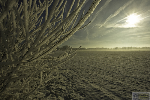 Frosty Limbs, Contrails, and Field (large view)