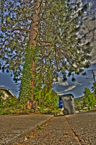 Curbside (large view)