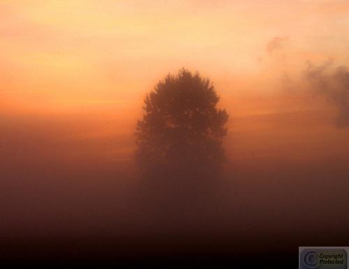 Morning Haze (large view)