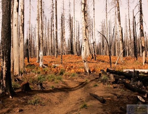 Burnt Garden (large view)