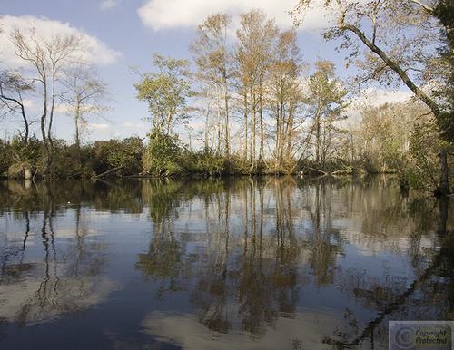 Great Dismal Swamp N.C. (large view)