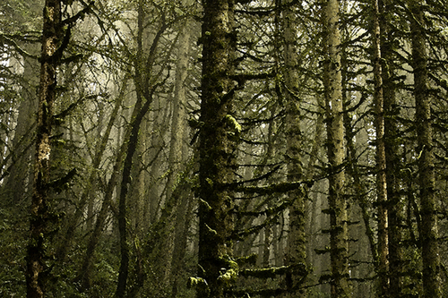 Headwaters Trail take 3 (large view)