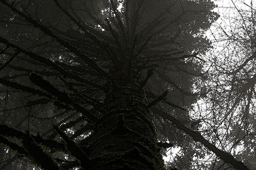 Skyward Trunk (large view)