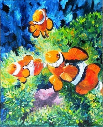 Clownfish, Madang