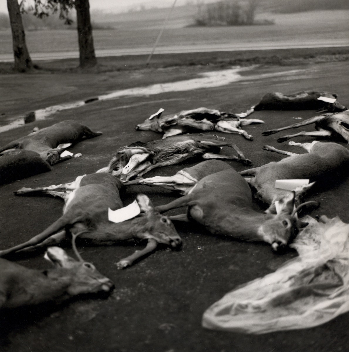 Photograph taken in Clear Spring, Maryland, of Greg with dead deer on the first day of hunting season at Ernst Market.    (large view)