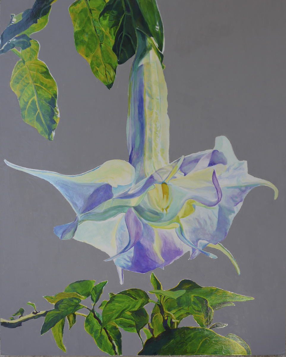 Angel's Trumpet (large view)