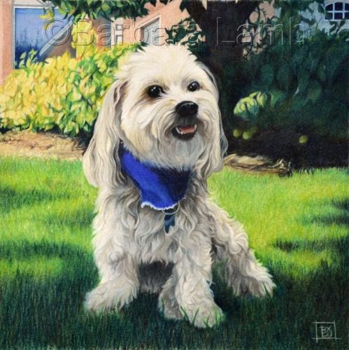 Buddy by Barbara Lamb Fine Art