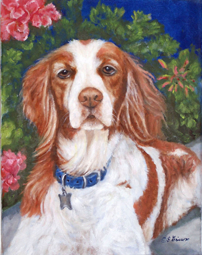 Chase - The Brittany Spaniel