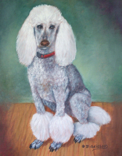 Breezy, the Standard Poodle