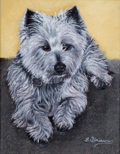 Rocky - the Cairn Terrier
