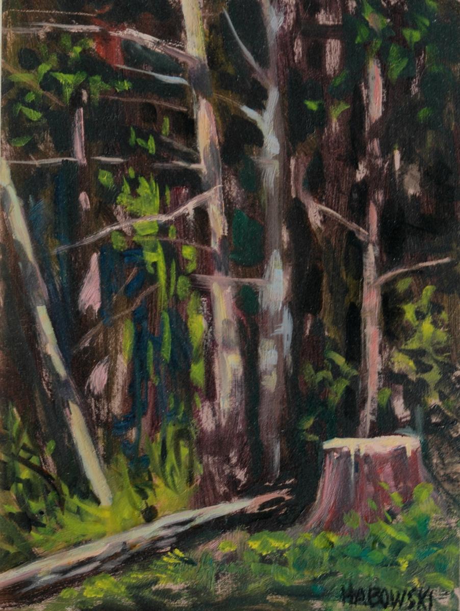 Sun Dappled Woods (large view)