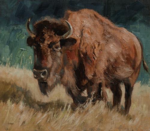 American Bison by Brenda Hendrix