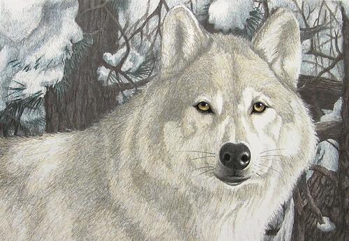 """Winter Wolf"""