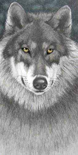 """Timberwolf"""