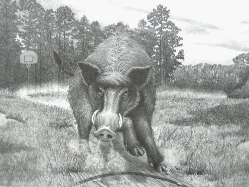 """""""Hog Wild"""""""