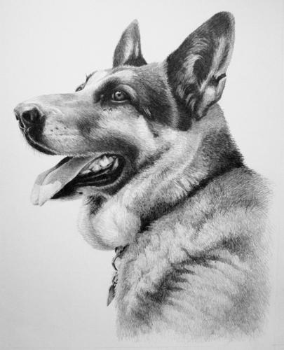 """German Shepherd - Dog Portrait"""