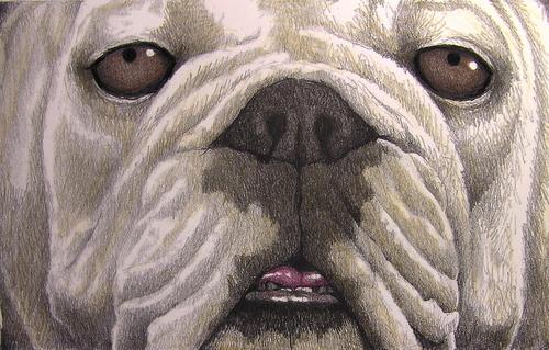 """Bulldog Eyes"""